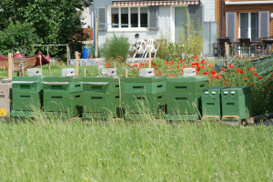 2011.05.27 Bienen Exkursion