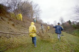 2004.02.11 Heckenpflege Toebeli